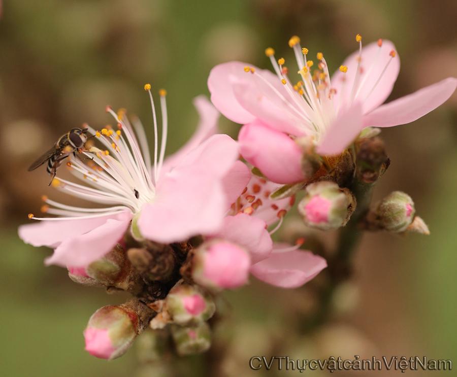 ong thăm bướm