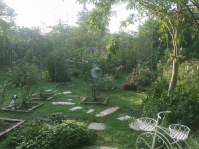 Nắng sớm Bình minh trên Công viên Thực Vật cảnh Việt Nam
