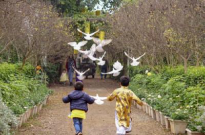 Các bé hòa mình cùng chim bồ câu