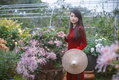 Hoa Cúc và Áo dài nhung truyền thống - Sự kết hợp quý phái