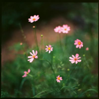 Những bông hoa tinh tế - Ảnh máy Film