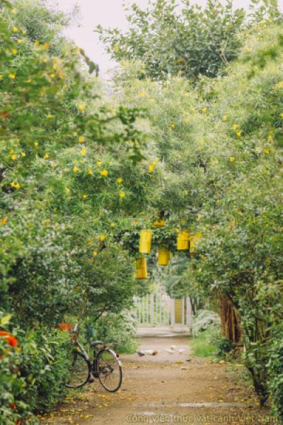 Con đường tường vi vào hạ