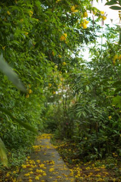 Lối đi phủ kín hoa vàng Huỳnh Liên