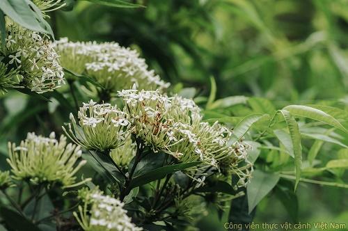 Những sắc hoa Mẫu đơn Thái