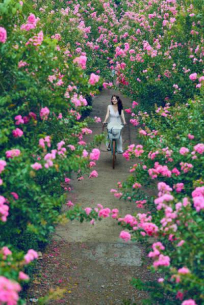 Người mẫu ảnh Trần Sơn Trà - Người tình hoa tường vi