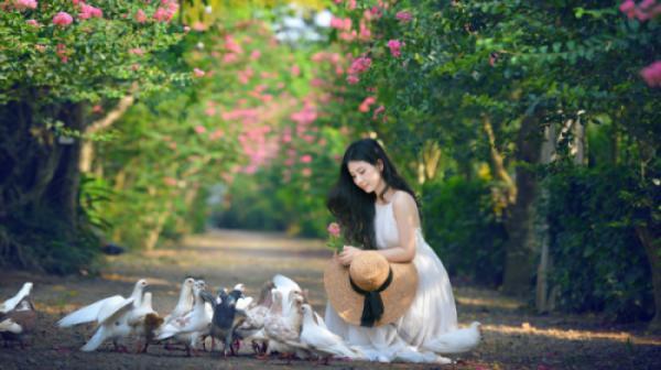 Lê Thảo - Người tình hoa tường vi