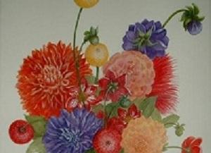 HOA THƯỢC DƯỢC - Có loài hoa nào tạo cảm xúc ấn tượng mạnh hơn khi được đắm hòa vào không gian sắc màu hoa Thược dược trong tiết đông giá  đang chờ đón Xuân về?