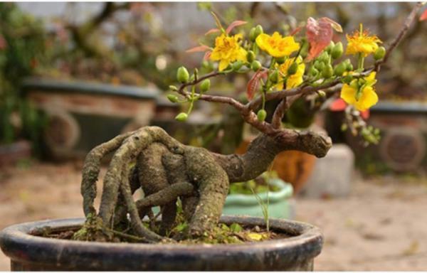 Công viên thực vật cảnh Việt Nam hướng dẫn 11 quy tắc giữ gìn, chăm sóc bảo tồn cây cảnh quý sau dịp lễ, tết