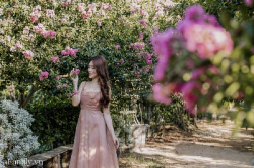 Có một con đường hoa tường vi toàn hồng tuyệt đẹp giữa lòng Hà Nội, chỉ mới nở rộ ít ngày nhưng đã trở thành địa điểm check-in