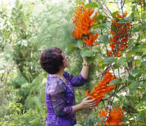 Du khách thích thú chụp ảnh cùng hoa Ngọc bích đỏ tại CV thực vật cảnh VN