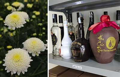 Rượu cúc làng Ngâu – Mỹ tửu tiến vua – Tinh hoa truyền thống
