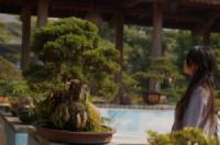 Viết về những cây Bonsai độc đáo - Hồng Hạnh