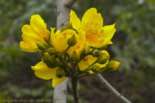 Nhật ký hoa tuần 2 tháng 3/2021 - Các giống cây bóng mát cho hoa, quả độc đáo