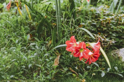 Nhật ký hoa tuần 4 tháng 3/2021 - Các loài hoa màu đỏ khoe sắc