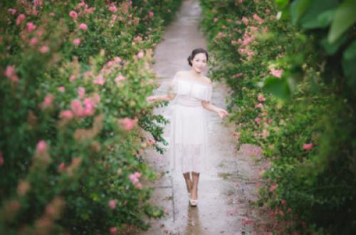 Con đường hoa Tường vi tại CV thực vật cảnh VN - Vẻ đẹp và chiều sâu giá trị lịch sử