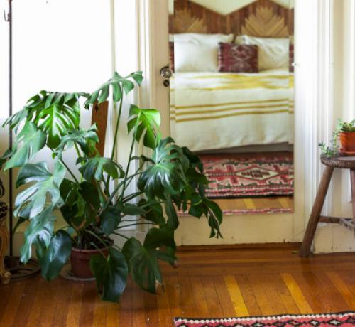 4  tiêu chí đánh giá một cây nội thất bóng râm đẹp và độc đáo