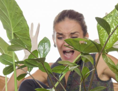 5 nguyên nhân khiến cây nội thất bóng râm bị sâu bệnh hoặc không khỏe mạnh