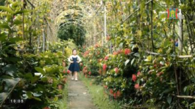 Chương trình Đẹp và Phong cách - Đài TH Hà Nội ghi hình tại CV thực vật cảnh VN