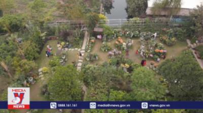 TH Thông Tấn VNews - Mãn nhãn với vườn cúc cổ trên 40 giống ngay tại HN