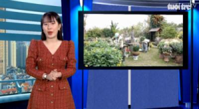 Tuổi trẻ TV - Khám phá vườn cúc cổ đẹp mê hồn giữa lòng Hà Nội