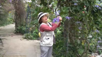 Cây mai xanh Thái - So sánh với cây mai xanh Đà Lạt (Petrea volubilis)