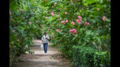 [Đài PT-TH Hà Nội] CV thực vật cảnh VN - Điểm vui chơi thư giãn cuối tuần cho người dân thủ đô